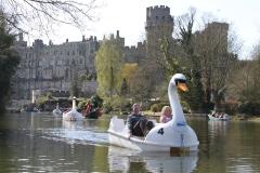 Swan pedalo