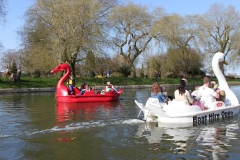 Dragon and swan pedalos