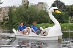 White swan pedalo
